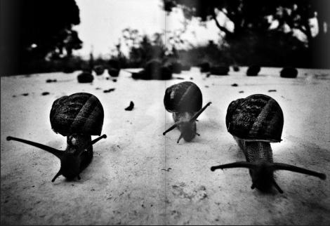 φωτ. : © Δημήτρης Τριανταφύλλου